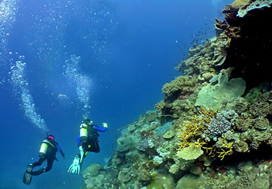 yacht charter diving